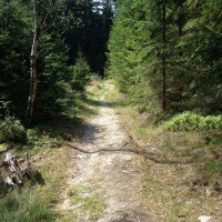 Cesta na Buchťák.